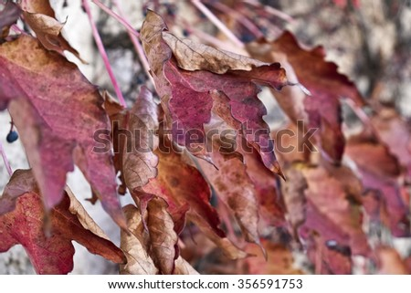 Italy, countryside, autumn leaves