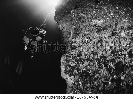 Italy, Ponza Island, Tyrrhenian sea, U.W. photo, scuba diver and a rocky wall full of yellow Anthozoans (Parazoanthus) -