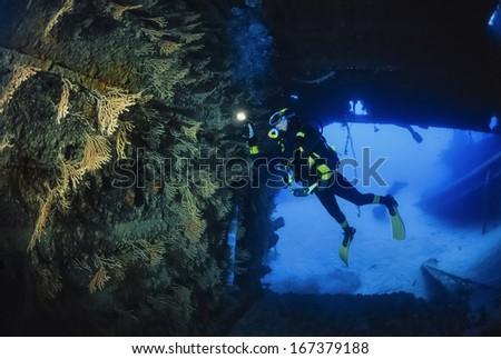 Italy, Ponza Island, Tyrrhenian sea, U.W. photo, wreck diving, yellow gorgonians in a sunken ship   - stock photo