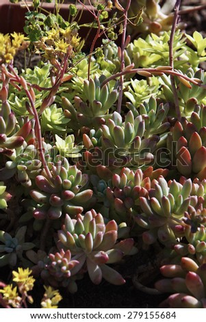 Italy, Sicily, succulent plants in a garden - stock photo