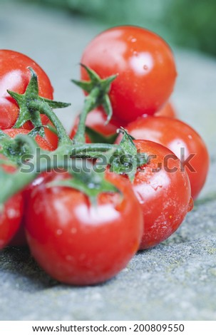 Italy, Tuscany, Magliano, Bunch of cherry tomatoes, close up