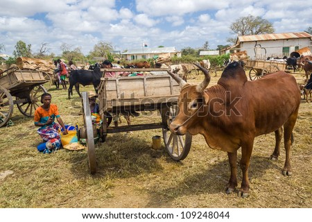 ITAMPOLO, MADAGASCAR - OCT 19:Unidentified Malagasy people of ethnic Antandroy at the market of Itampolo in the south of Madagascar on October 19, 2006. Antandroy are an ethnic group of Androy region - stock photo