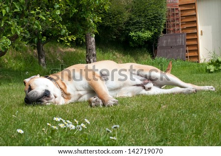 Its a hard life being a dog - stock photo