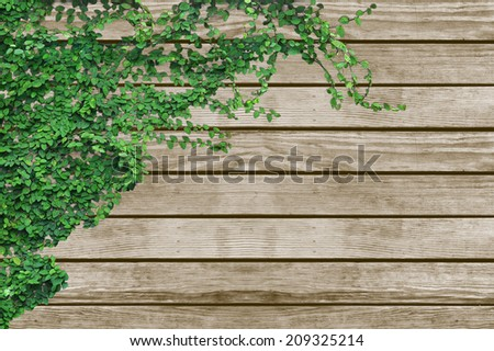 ivy and wood texture background - stock photo