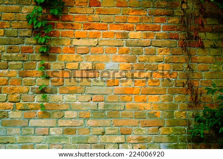 Ivy growing on a ancient brick wall  - stock photo