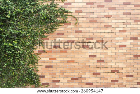 Ivy grows on brick wall text, background
