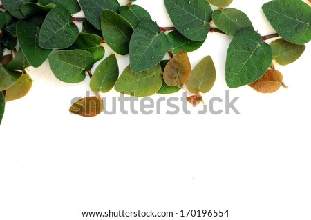 Ivy leaves plant on wall isolated on white - stock photo