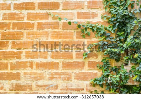 Ivy leaves texture on red brick wall