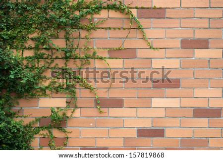 Ivy on brick wall.