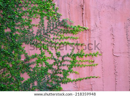 Ivy on cement walls. - stock photo