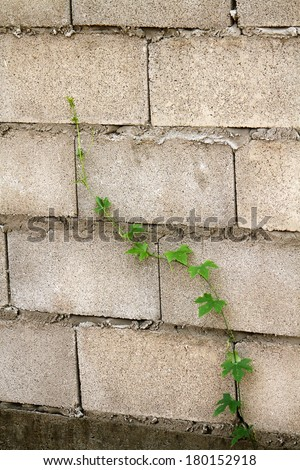 Ivy on the cement block - stock photo