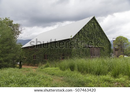 Ivy on the old house, Green leaves on the old wooden house
