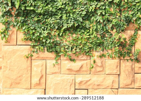 ivy wall floral background - stock photo