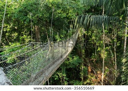 Iwokrama Canopy walkway - Views around Guyanau0027s Interior and rainforest & Iwokrama Canopy Walkway Views Around Guyanas Stock Photo 356510669 ...