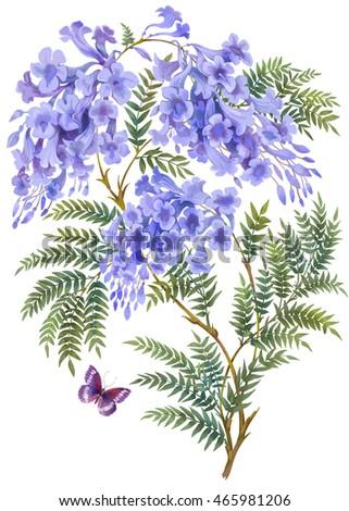 Jacaranda Tree Flowers Leaves Isolated On Stock Illustration