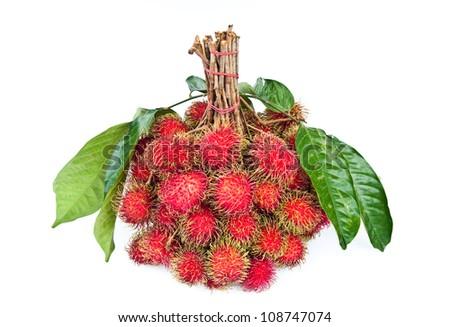 Jack fruit hanging on the tree - stock photo