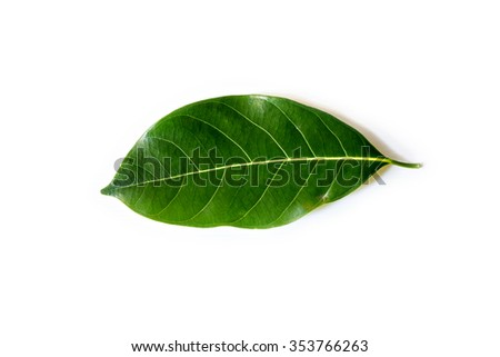 Jack fruit leaf isolated on white background