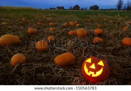 jack-o-lantern in pumpkin patch