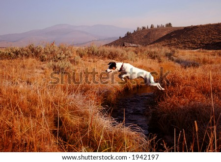 Jack Russel Terrier creek jumping - stock photo