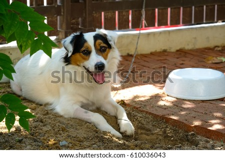 Jack Russel Terrier dog sleeping outdoors , selective focus