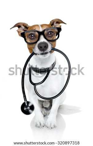 jack russell dog  as a medical veterinary doctor with stethoscope with glasses, isolated on white background