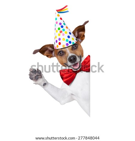 jack russell dog  as a surprise, behind white and blank banner or placard ,wearing  red tie and party hat  , isolated on white background - stock photo