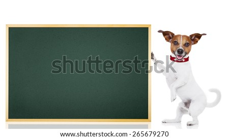 jack russell dog as school student  holding a blackboard , isolated on white background - stock photo