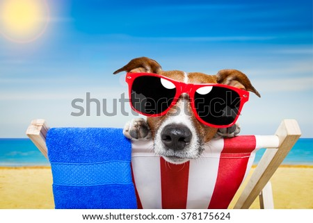 jack russell dog at the beach on a hammock on summer vacation holidays - stock photo