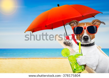 jack russell dog at the beach on a hammock , with cocktail on summer vacation holidays