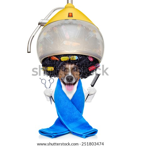 jack russell dog at the groomer or hairdresser, under  drying hood,holding a scissors and a hair comb, isolated on white background - stock photo