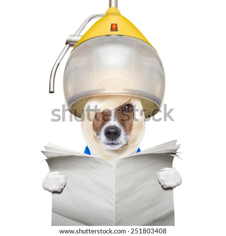 jack russell dog at the groomer or hairdresser, under the drying hood,reading a blank newspaper, isolated on white background - stock photo
