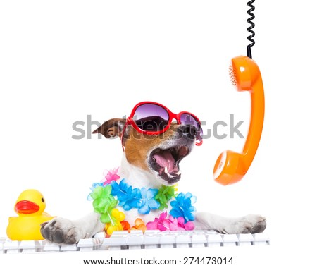 jack russell dog booking summer vacation holidays online using a pc computer keyboard, while shooting on the phone very loud ,wearing sunglasses and a flower chain , isolated on white background - stock photo