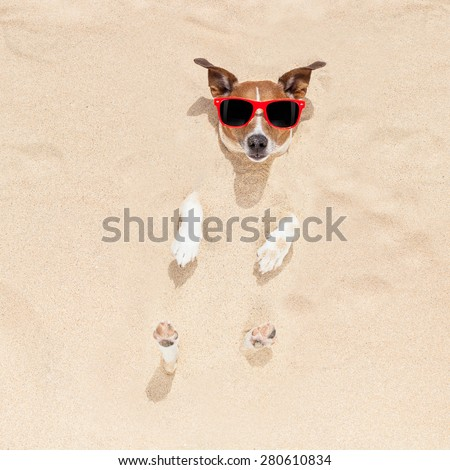 jack russell dog  buried in the sand at the beach on summer vacation holidays , wearing red sunglasses - stock photo