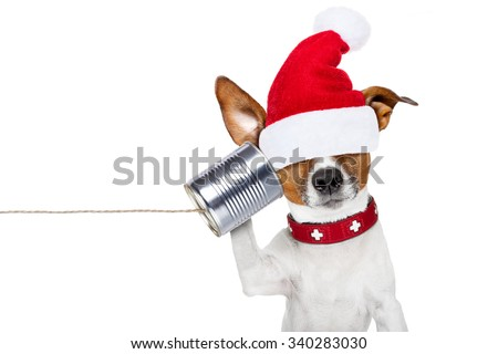 jack russell dog listening on tin phone with  santa claus hat, isolated on white background on christmas holidays  - stock photo