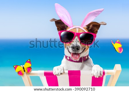 jack russell dog on a hammock , during easter holidays, with bunny ears on summer