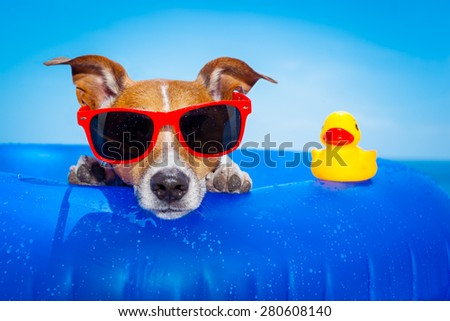 jack russell  dog  on a mattress in the ocean water at the beach, enjoying summer vacation holidays, wearing red sunglasses  with yellow     plastic rubber duck - stock photo