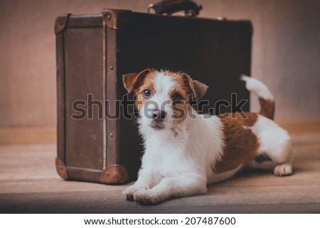Jack Russell dog on a suitcase - stock photo