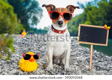 jack russell dog on summer holidays at the river, rubber duck and placard - stock photo
