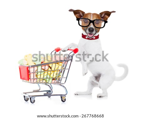 jack russell dog  pushing a shopping cart full of tasty treats  and cookies , isolated on white background - stock photo