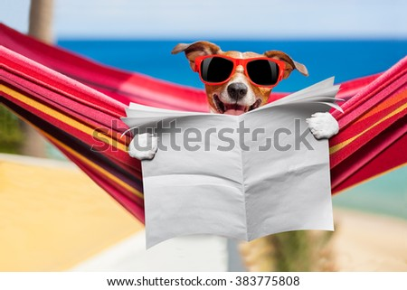 jack russell dog , reading blank newspaper on hammock at the beach on summer vacation holidays