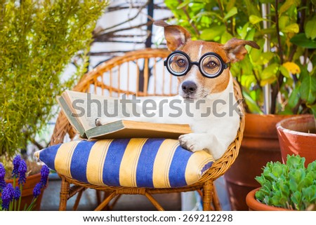 jack russell dog reading his favorite book,surrounded by green plants , relaxing and sitting on a lounger or deck chair outside - stock photo