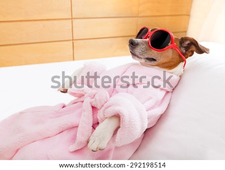 jack russell dog relaxing  and lying, in   spa wellness center ,wearing a  bathrobe and funny sunglasses - stock photo