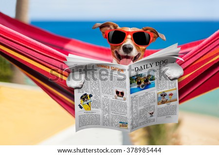 jack russell dog relaxing on a fancy red  hammock  with red sunglasses reading newspaper or  magazine,  on summer vacation holidays at the beach - stock photo