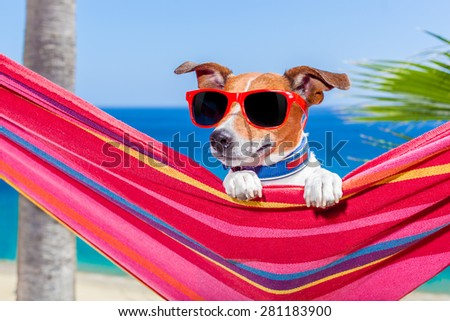 jack russell dog relaxing on a fancy red  hammock with sunglasses in summer vacation holidays at the beach under the palm tree - stock photo