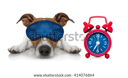 jack russell dog resting ,sleeping or having a siesta  with a clock and eye mask - stock photo