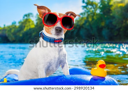 jack russell dog sitting on an inflatable  mattress in water by the  sea, river or lake in summer holiday vacation , rubber  toy included - stock photo