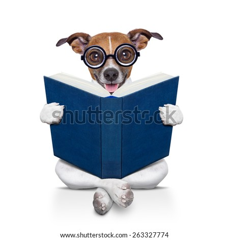 jack russell dog sitting reading a big book, isolated on white background - stock photo