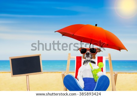 jack russell dog with caipirinha cocktail  on a beach chair with sunglasses under umbrella , on summer vacation holidays, placard or banner to the side - stock photo