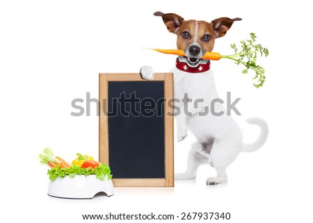jack russell dog  with  healthy  vegan or vegetarian food bowl, holding a blank empty blackboard, isolated on white background