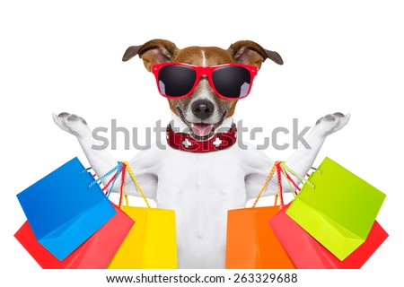 jack russell dog  with shopping bags ready for discount and sale at the  mall, isolated on white background - stock photo